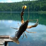 Kräftfiske med Upplev
